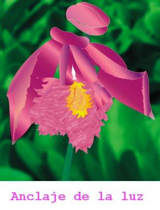 esencia de orquidea